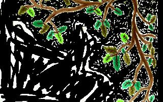 Кора дуба для полоскания десен